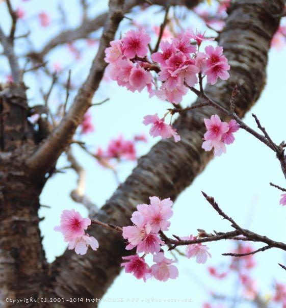 月曜鮭弁 ✿ すき焼きと太巻き(≧з≦)b_c0139375_120536.jpg