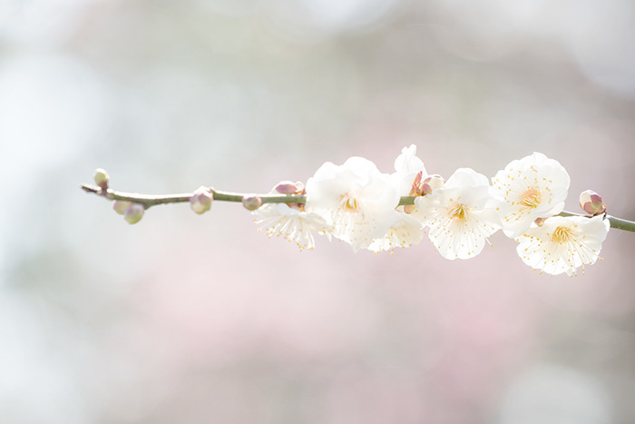 鎌倉 長谷寺の梅_b0145398_00040469.jpg