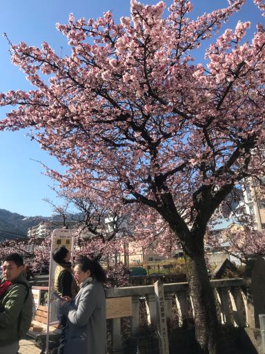 熱海は桜の季節_f0101201_10383896.jpg