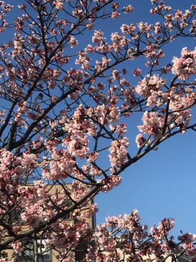 熱海は桜の季節_f0101201_10385911.jpg