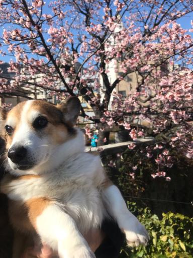 熱海は桜の季節_f0101201_10413668.jpg