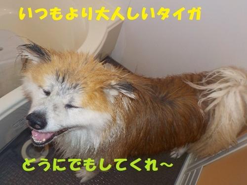 f0121712_00165410.jpg