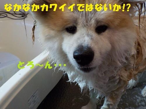 f0121712_00185889.jpg