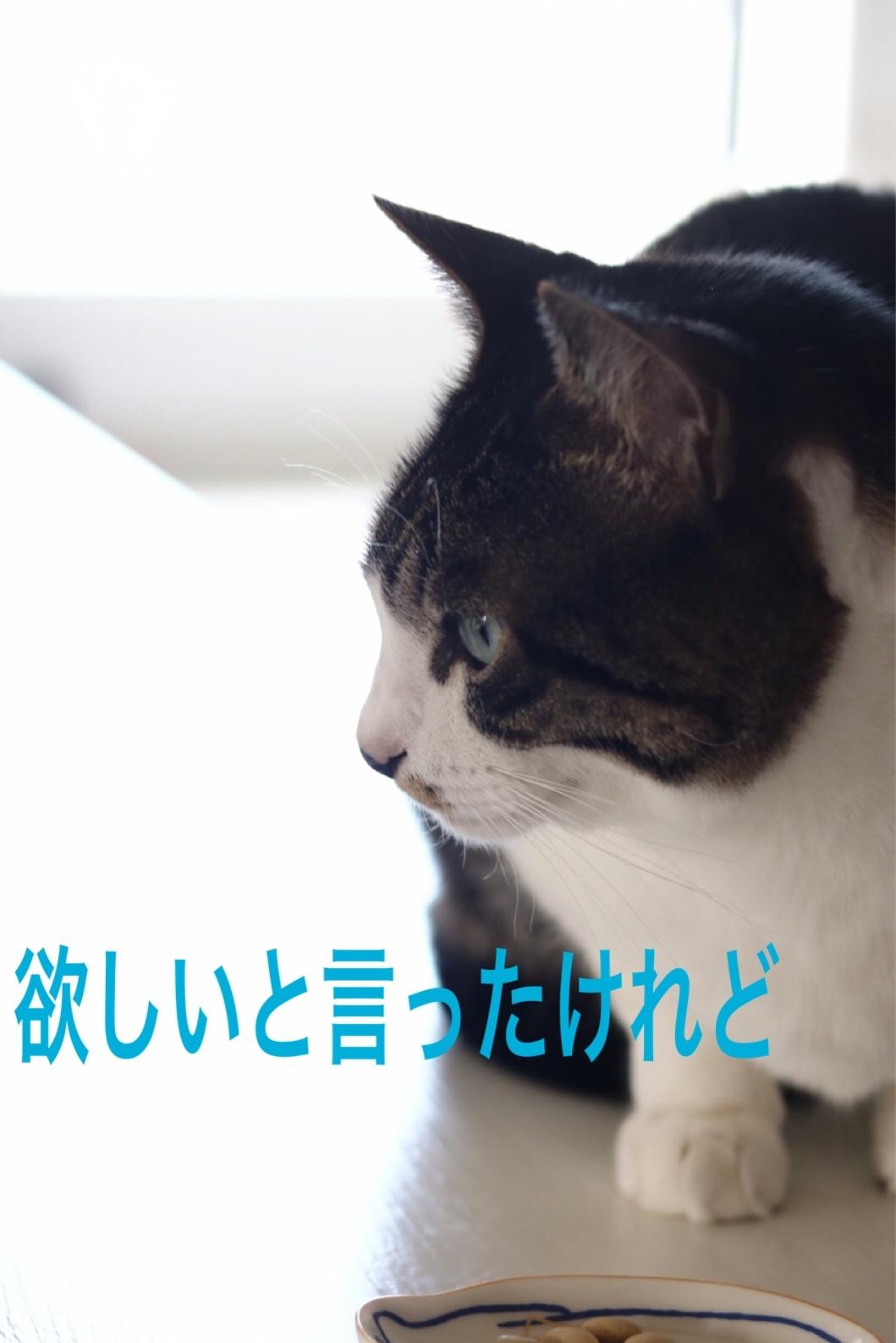 にゃんこ劇場「豆は食わねど」_c0366722_10412002.jpeg