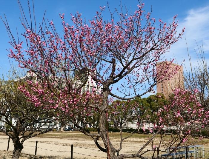 和歌山城公園・西の丸広場にて  2019-02-06 00:00   _b0093754_21361659.jpg