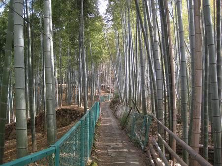 日本滞在 2 - 伏見稲荷 -_a0280569_1926145.jpg