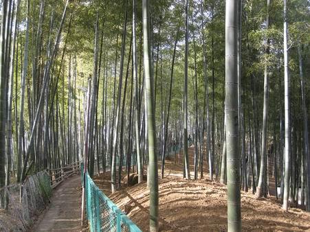 日本滞在 2 - 伏見稲荷 -_a0280569_1927092.jpg