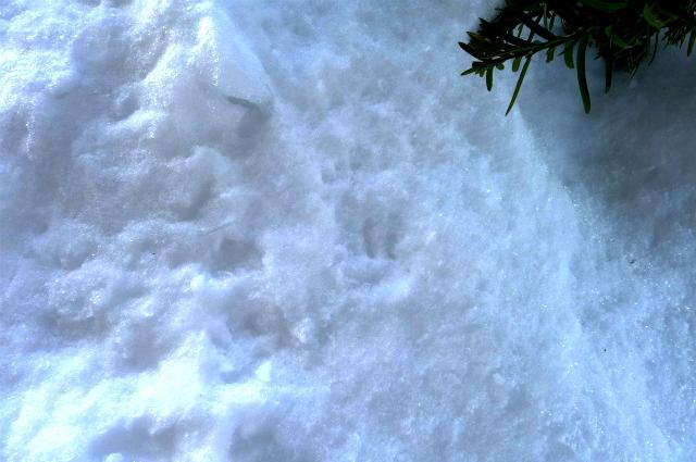 小さな足跡/ Small Footprints_e0120899_10144733.jpg