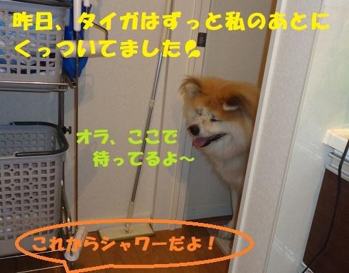 f0121712_23050186.jpg