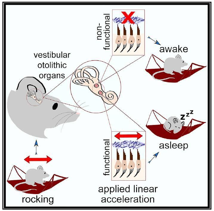 雪のとける真冬日に振動と睡眠の論文を読む_c0025115_22300228.jpg