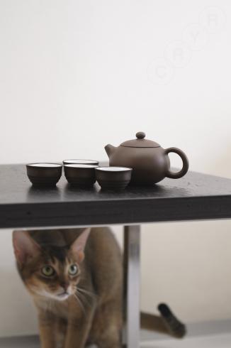 [猫的]From China._e0090124_22395727.jpg