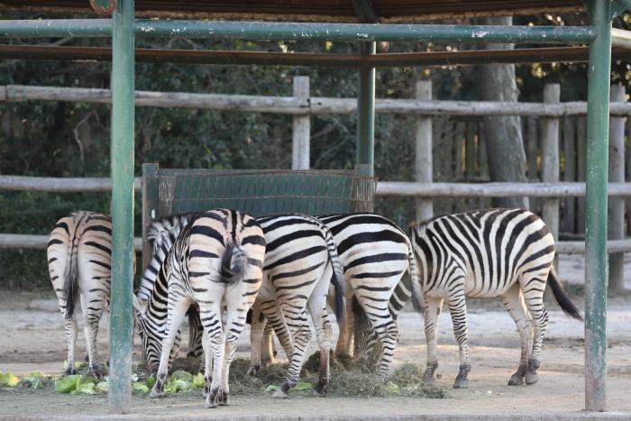 【東武動物公園】_f0348831_22232325.jpg