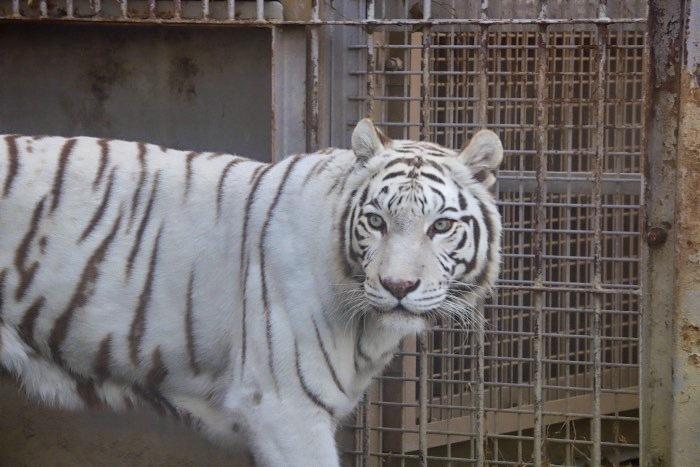 【東武動物公園】_f0348831_22255933.jpeg
