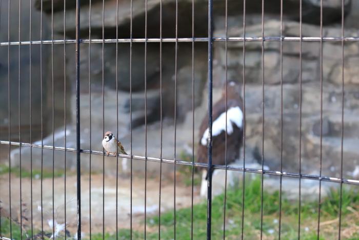 【東武動物公園】_f0348831_22302512.jpg