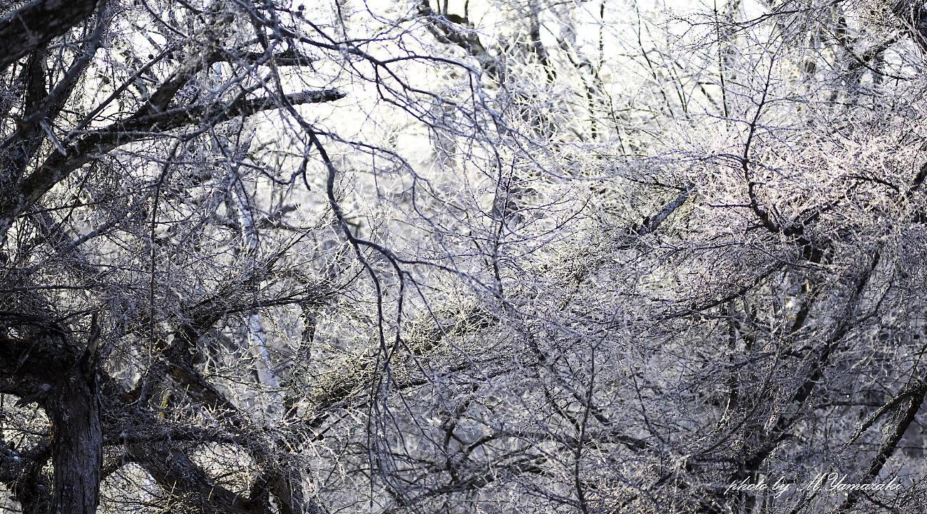 樹氷とマヒワ_c0217255_06085544.jpg