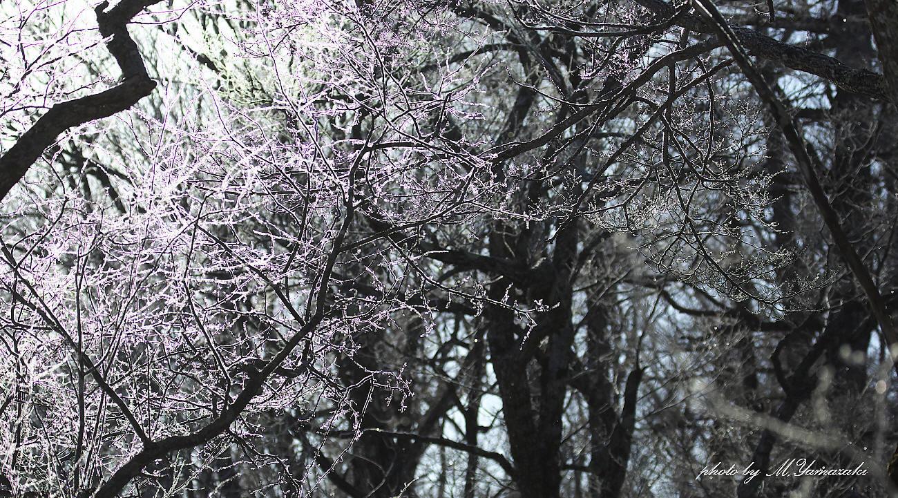 樹氷とマヒワ_c0217255_06090889.jpg