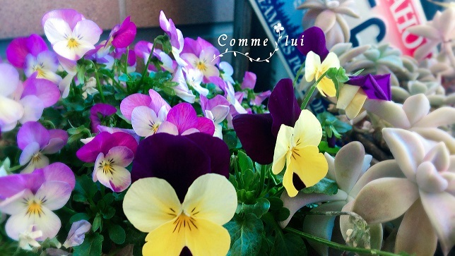 春の気配♬_a0192475_09112258.jpg