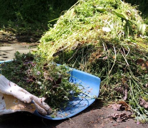 植物残渣の後始末_b0391989_09222157.jpg