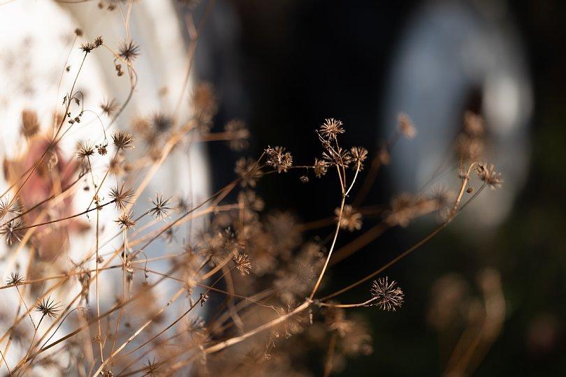 冬枯れした雑草の中の赤錆赤虎_d0353489_19035122.jpg