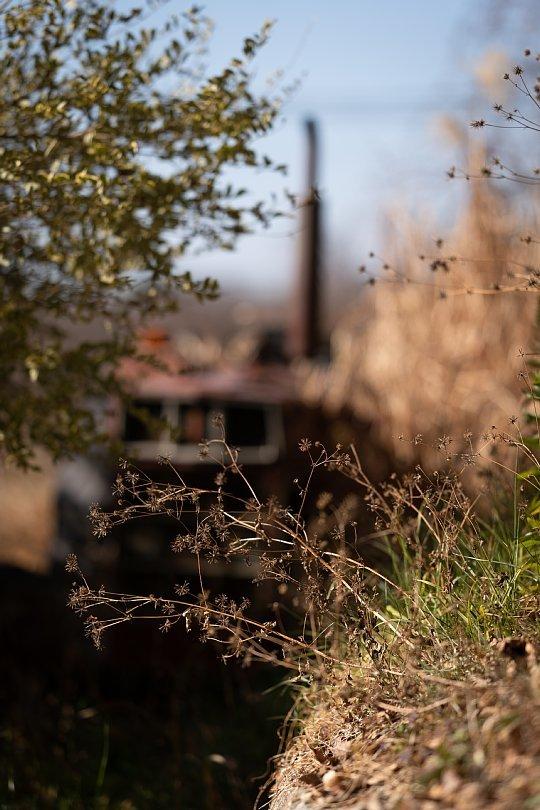 冬枯れした雑草の中の赤錆赤虎_d0353489_19040111.jpg