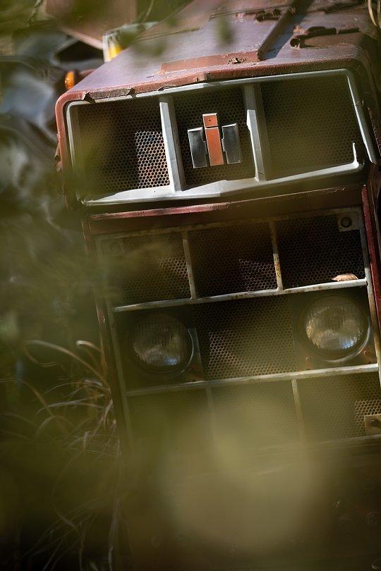 冬枯れした雑草の中の赤錆赤虎_d0353489_19074075.jpg