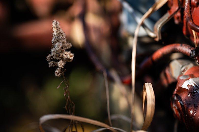 冬枯れした雑草の中の赤錆赤虎_d0353489_19175084.jpg