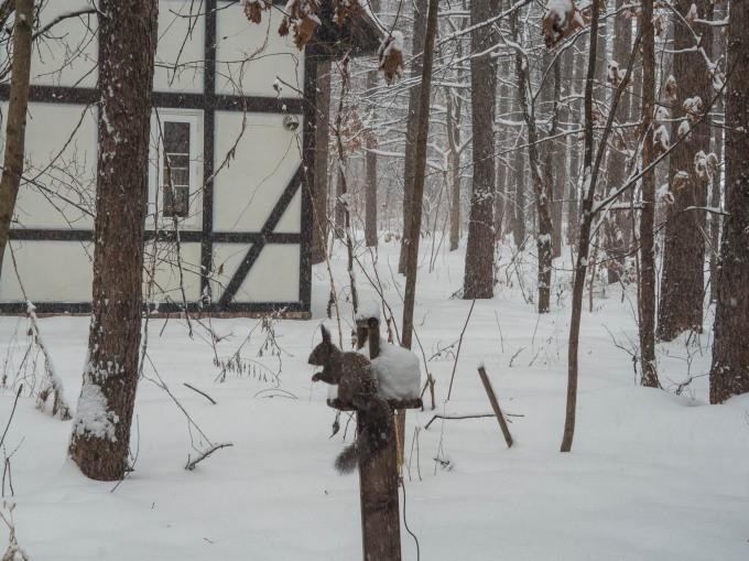 """ついに雪のスイッチが入ったかな?ひさびさの""""雪リス""""_f0276498_23492413.jpg"""