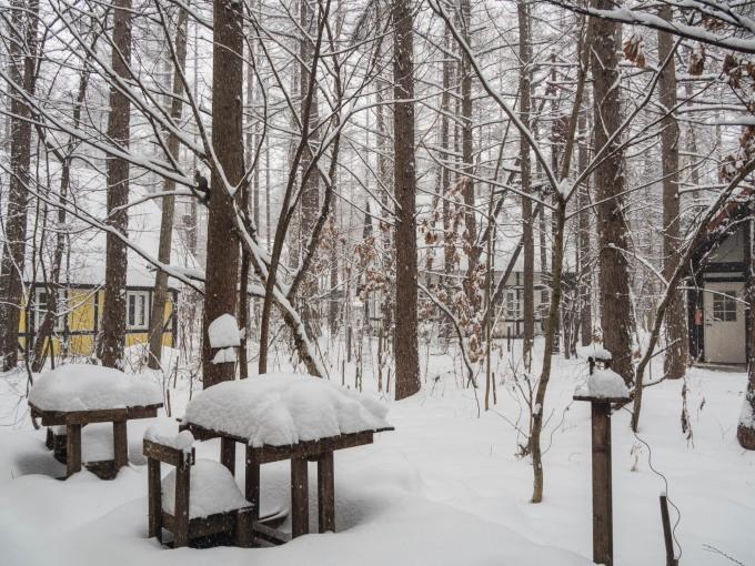 """ついに雪のスイッチが入ったかな?ひさびさの""""雪リス""""_f0276498_23500672.jpg"""