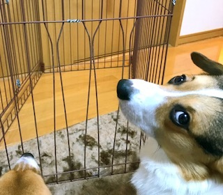 犬VS人間_b0303601_17172592.jpg