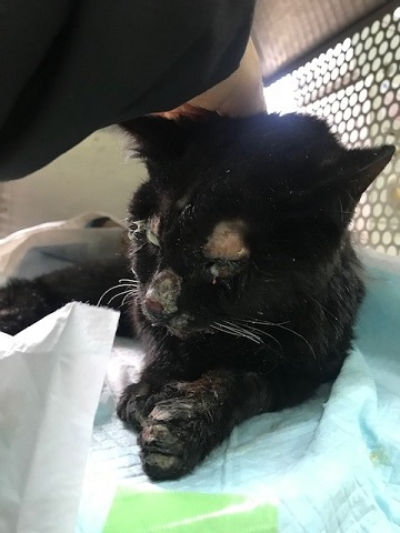 負傷の猫2匹_f0242002_11131768.jpg