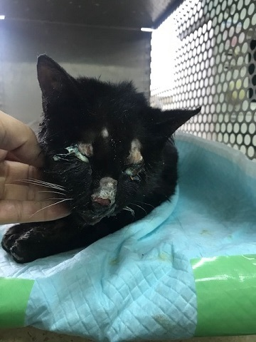 負傷の猫2匹_f0242002_11132140.jpg