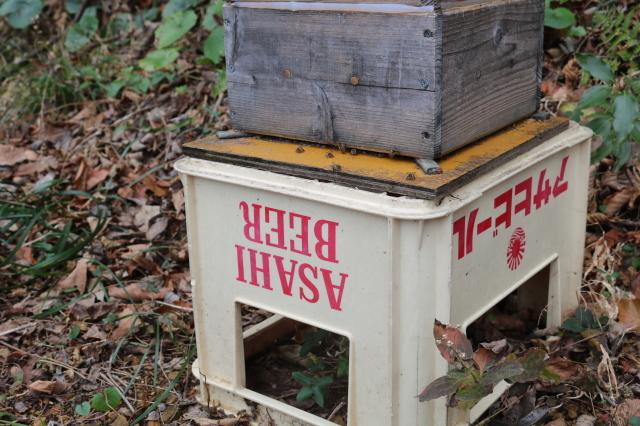 日本蜜蜂のアカリンダニ対策で蟻酸を投与_f0176521_22141797.jpg