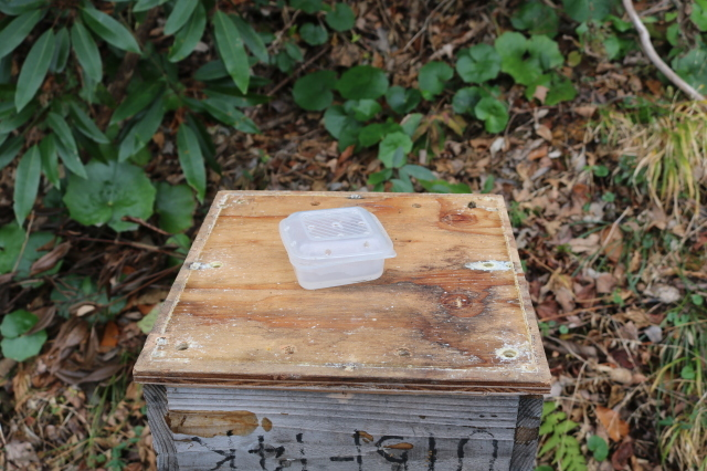 日本蜜蜂のアカリンダニ対策で蟻酸を投与_f0176521_22144910.jpg