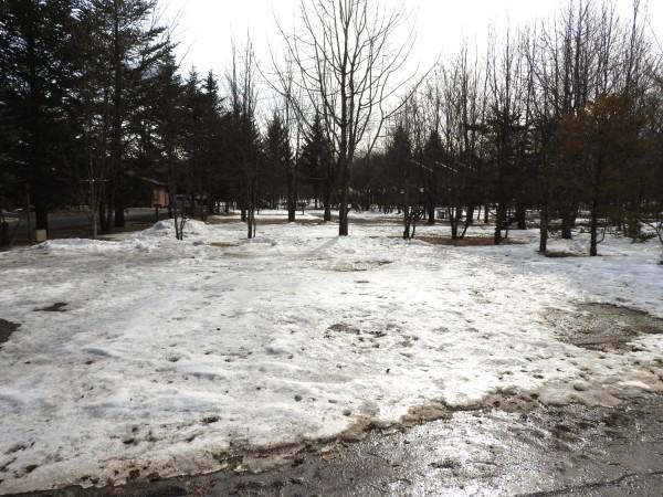 今週末の天気と気温(2019年2月7日):雪解けが進んでいます_b0174425_23165314.jpg