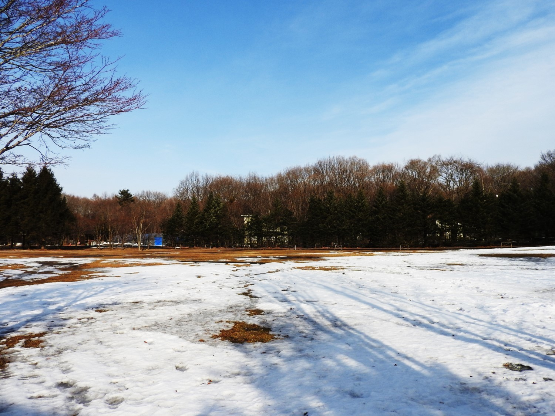 今週末の天気と気温(2019年2月7日):雪解けが進んでいます_b0174425_23171098.jpg