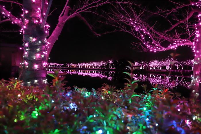 【東武動物公園】ウィンターイルミネーション_f0348831_23374611.jpg