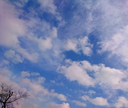 2/7(木)①    春待つ空とミモザ。_d0362666_10551476.jpg