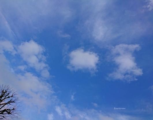 2/7(木)①    春待つ空とミモザ。_d0362666_10555694.jpg