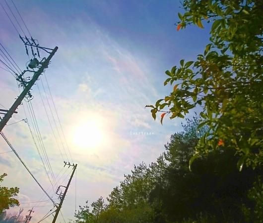2/7(木)①    春待つ空とミモザ。_d0362666_10573871.jpg