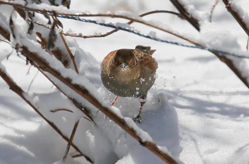 雪の日の続きです。_f0368272_22423772.jpg