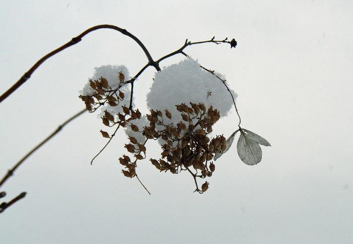 雪景色_d0162994_09134745.jpg