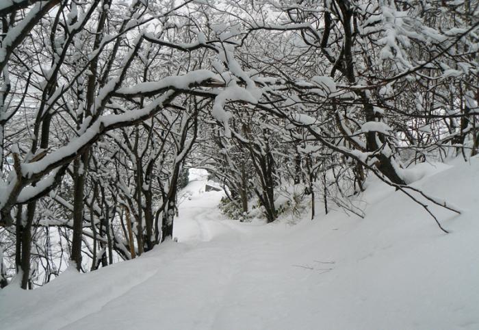 雪景色_d0162994_09193366.jpg