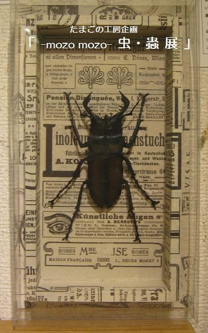 たまごの工房企画 「 -mozo mozo- 虫・蟲  展 」 その3_e0134502_11281509.jpg
