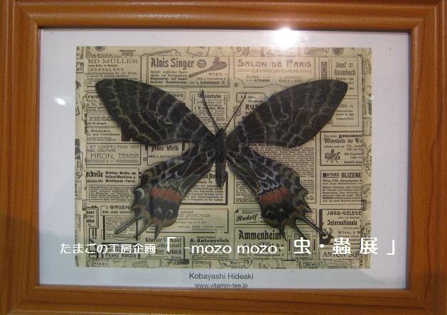 たまごの工房企画 「 -mozo mozo- 虫・蟲  展 」 その3_e0134502_11290309.jpg