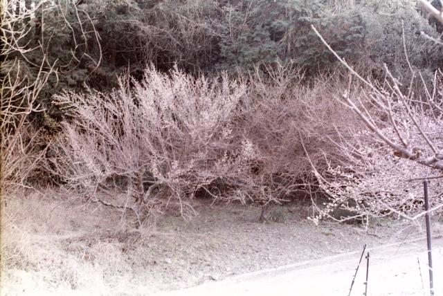 カラーネガフィルム簡易二浴式現像の報告  怠惰老人照生_d0138130_11063388.jpg
