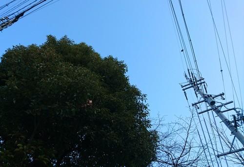 今日もいい天気!_f0373339_139127.jpg