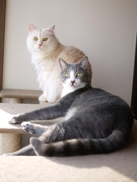 猫のお留守番 天ちゃん麦くん茶くん〇くんAoiちゃん編。_a0143140_19024078.jpg