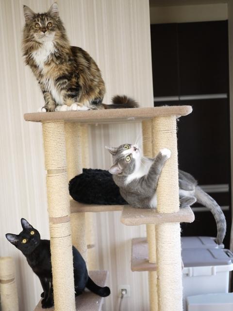 猫のお留守番 天ちゃん麦くん茶くん〇くんAoiちゃん編。_a0143140_19043594.jpg