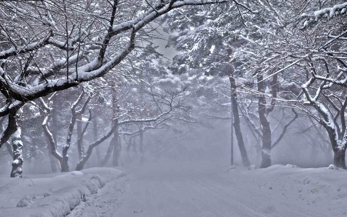 今日の雪事情_e0220159_11504394.jpg