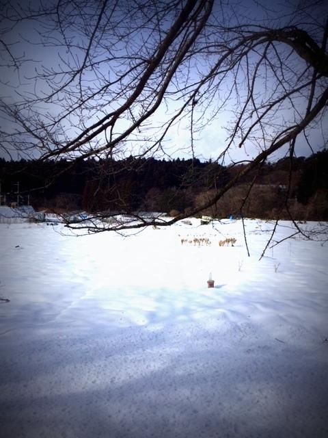 February ・・・_f0154697_18405391.jpg